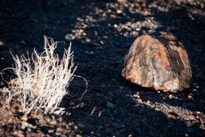 Petrified Forrest 2015-29